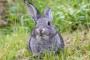 Exceso de Calcio y Piedras en el Tracto Urinario en Conejos
