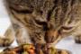 Alimentación para prevenir la diabetes en los gatos