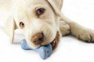 Kong Toys y los beneficios de masticar en los perros
