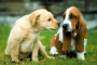 ¿Tu perro vomita sangre? Qué hacer a continuación
