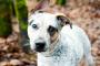 Datos del cerebro del perro: comprensión de la cognición canina