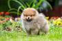Miedo extremo y ansiedad en perros
