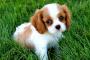 5 suplementos para perros que debes conocer