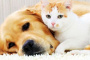 Alergias de la piel vs alergias a los alimentos en perros y gatos