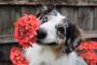 Consejos, trucos y listas para un jardín de verano que admite mascotas.