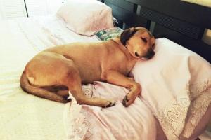 ¿Por qué mi perro orina en la cama?
