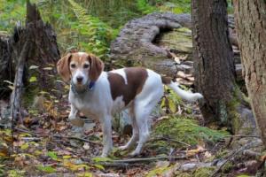 5 comportamientos caninos que pueden significar más de lo que se ve en el ojo
