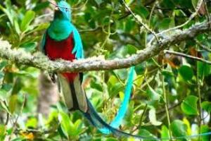 Toxicidad de vitamina D en aves