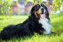 Desarrollo del tejido cerebral en perros