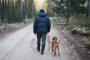Viaje para perros - 10 consejos para llevar a tu perro en vacaciones