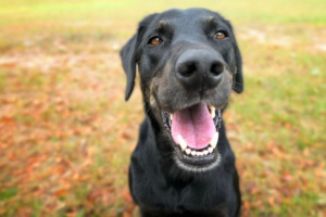 Heridas punzantes en perros