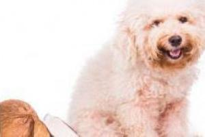 Cómo tratar el taburete de mucosa en perros