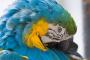 ¿Por qué su ave bota o muda sus plumas?