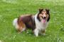 Trastorno de la médula espinal causado por un vaso sanguíneo bloqueado en los perros