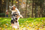 Tiempo de juego y tu perro