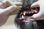 Enfermedad periodontal en perros: síntomas, causas y tratamientos.