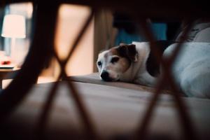 ¡Ayuda! ¡Mi perro está llorando en su caja! ¿Que debería hacer?