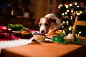 Cómo mantener su hogar seguro para perros durante las vacaciones