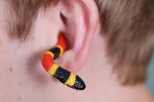 ¿Pueden las serpientes escuchar?