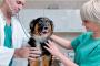 7 caridades de perros a las cuales ayudar en estas navidades