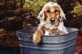 Con qué frecuencia bañar a tu perro