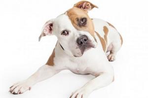 ¿Por qué los perros inclinan sus cabezas?
