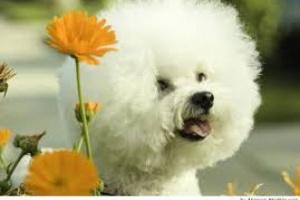 Verse bien, sentirse bien: conceptos básicos sobre el arreglo del perro