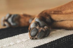 ¿Tu perro está mordiendo constantemente sus patas? He aquí cómo puedes ayudar.