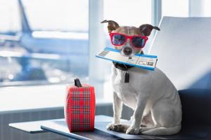 Cómo viajar con tu perro: volar con tu perro.