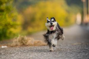 Inflamación de la vejiga con pólipos en los perros
