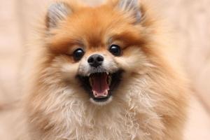 Fundamentos del equipo para perros: lo que necesita