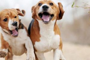 5 consejos para evitar que tu perro ladre