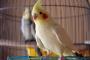 Cosas que tiene que considerar antes de tener un ave como mascota