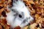 Cabello y bolas de pelo enmarañadas en el estómago en conejos