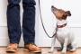8 grandes habilidades para enseñar a tu perro recién adoptado