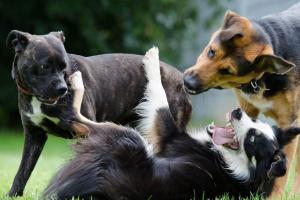 Hablemos sobre el ejercicio del perro: ¿Cuánto ejercicio necesita un perro todos los días?