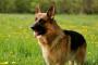 Los 10 mejores signos de que su perro puede ser estresado