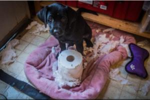 ¿Está enojado mi perro cuando destruye mis cosas?