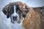 Adaptaciones estacionales para mascotas mayores