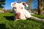 Cómo limpiar las orejas de un perro con vinagre y agua