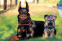 ¡10 lecciones de atención plena que podemos aprender de nuestros perros!