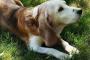Signos comunes de artritis en perros