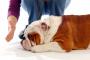 Diez mejores consejos de entrenamiento para perros