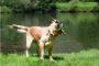 ¿Por qué mi perro apesta cuando está mojado?