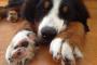 3 consejos útiles para simplificar la sesión de recorte de uñas de su perro.