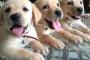 Enfermedad articular degenerativa en perros