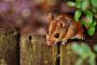 Conociendo a los ratones