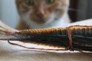 ¿Son los alimentos para gatos con sabor a pescado los causantes del hipertiroidismo?