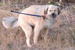 Acerca de enseñar a tu perro dónde ir al baño