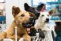 ¿Qué centro de adopción de mascotas debes elegir?